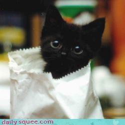 bag cute kitten - 3394786048