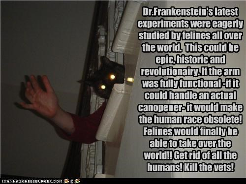 Dr.Frankenstein's latest experiments were eagerly studied by felines all over the world. This could be epic, historic and revolutionairy. If the arm was fully functional -if it could handle an actual canopener- it would make the human race obsolete! Felines would finally be able to take over the world!! Get rid of all the humans! Kill the vets!