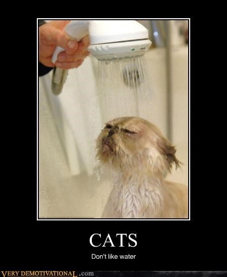 horrible,water,Cats