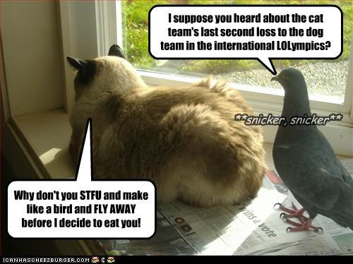 I suppose you heard about the cat team's last second loss to the dog team in the international LOLympics? Why don't you STFU and make like a bird and FLY AWAY before I decide to eat you! **snicker, snicker**