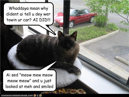 car helping meow - 3396681472