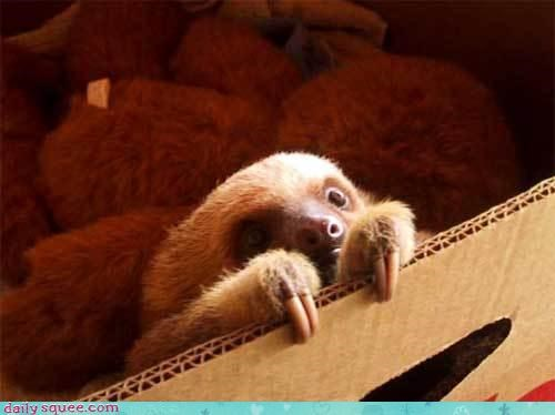 baby cute sloth - 3397137408
