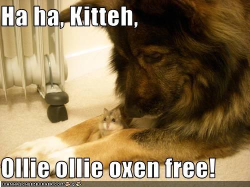 Ha ha, Kitteh,  Ollie ollie oxen free!