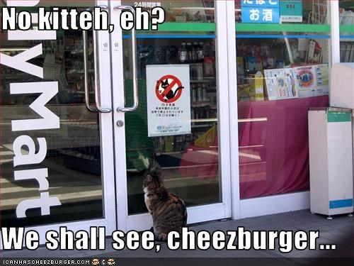 Cheezburger Image 3397812224