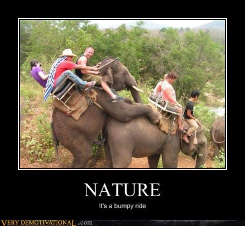 animals demotivational elephants hilarious humping mating tourists - 3398941184