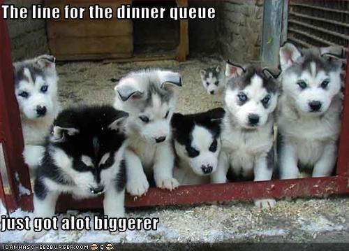 Cheezburger Image 3399348992