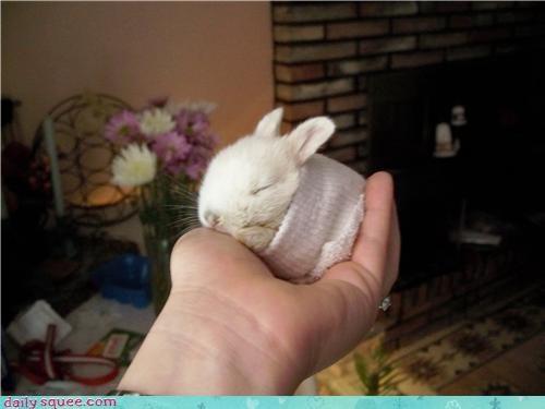 bracer,bunny,sock