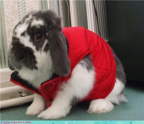 bunny costume hipster - 3400333056