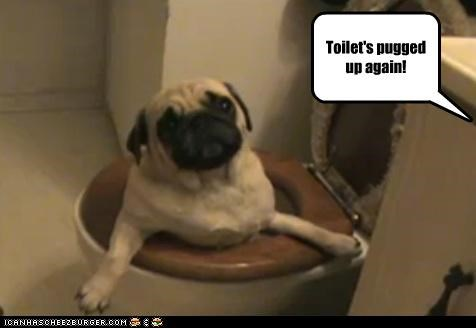 clog cute pug toilet wet - 3400386816