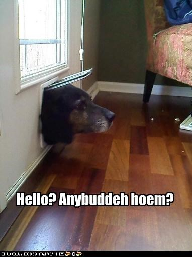 doggie door,Home Alone,mixed breed,silly,stuck,too big,whatbreed