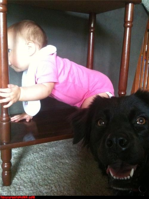 Animal Bomb Awkward baby cute dogs - 3400971008