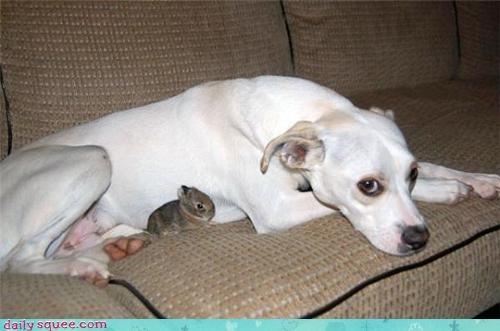 bunny,cute,greyhound