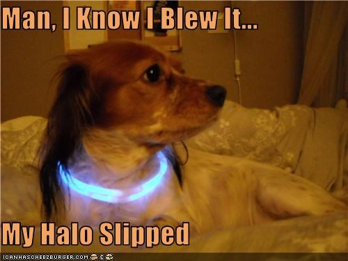 collar glowing halo spaniel mix - 3402855680