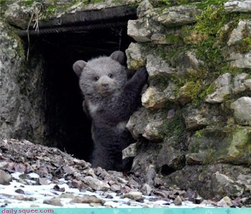bear cute face - 3404185344