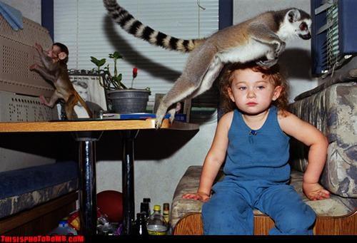 Animal Bomb animals awesome baby - 3404624896