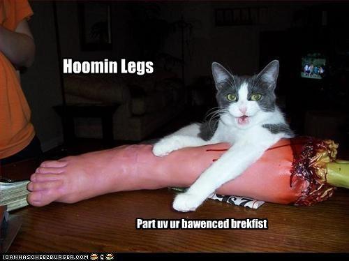 Hoomin Legs Part uv ur bawenced brekfist