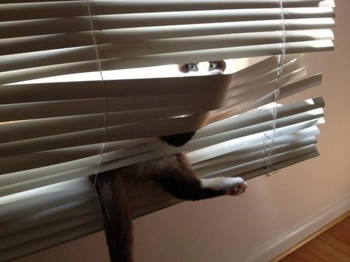blinds vs fight lolcats - 34053