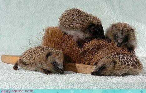 baby cute hedgehog - 3405420544