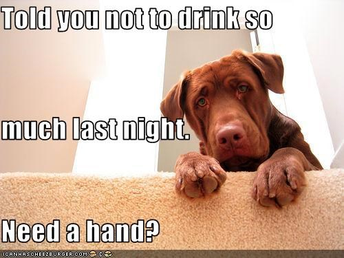 chesapeake bay retriever,drinking,help,stairs