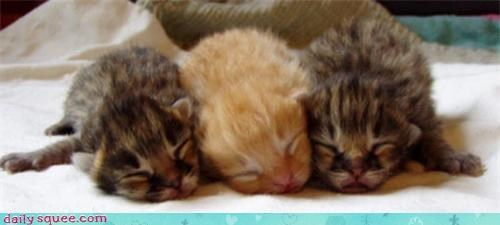 baby kitten siblings - 3406579968