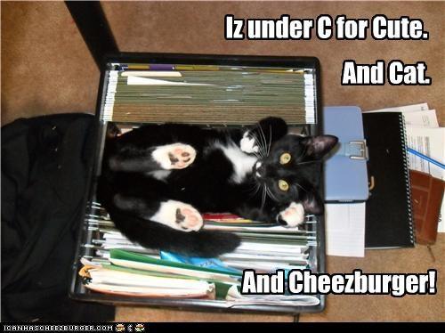 Cheezburger Image 3406876928