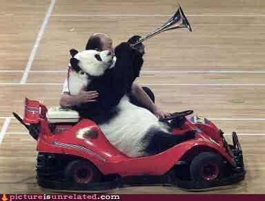 animals anthropomorphic driving panda wtf - 3408232192