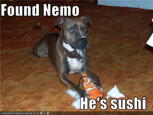 fish,pit bull,stuffed toy,sushi