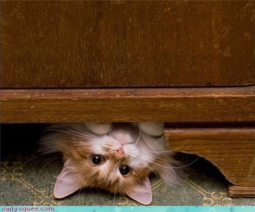 cute face kitty - 3409605376