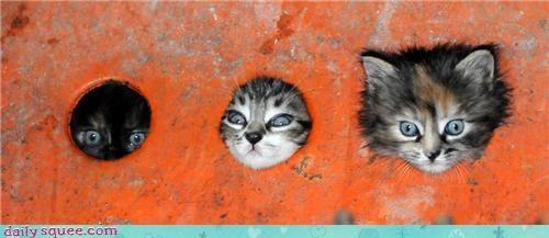 big head cute kitten - 3409611520