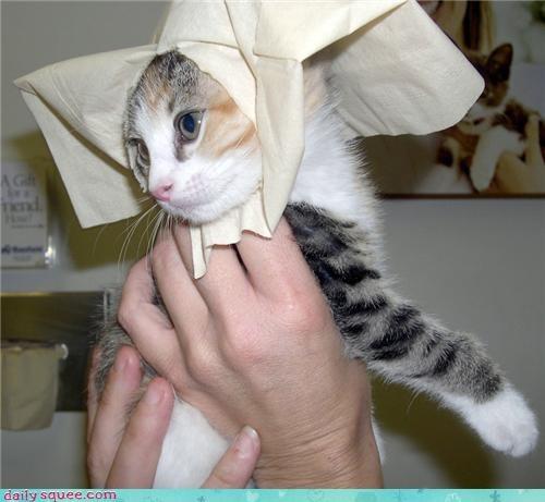 cat kitten nun - 3409615360