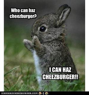 Cheezburger Image 3410455808