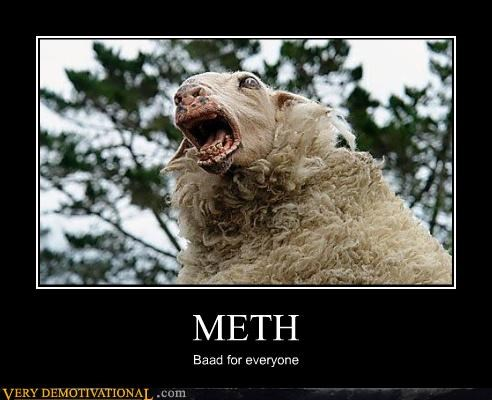 bad Hall of Fame meth sheep Terrifying tweaking - 3412849408