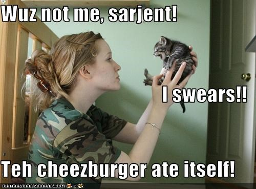 Cheezburger Image 3413639936
