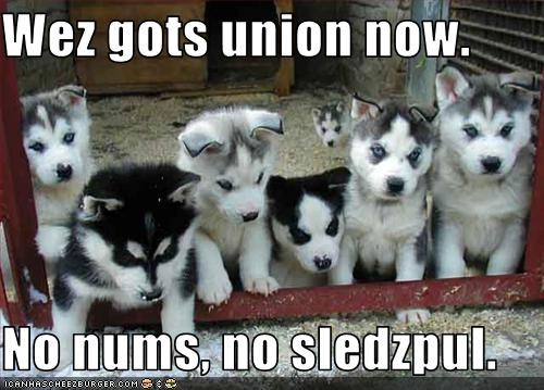 puppies union - 3413913600