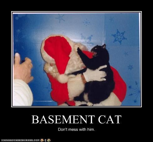 BASEMENT CAT Don't mess with him.