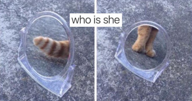Collection of memes about the meme trend who is she.