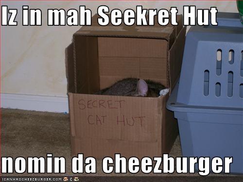 Cheezburger Image 3415191552