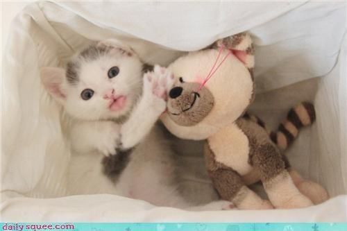 cute kitten stuffie - 3416131072