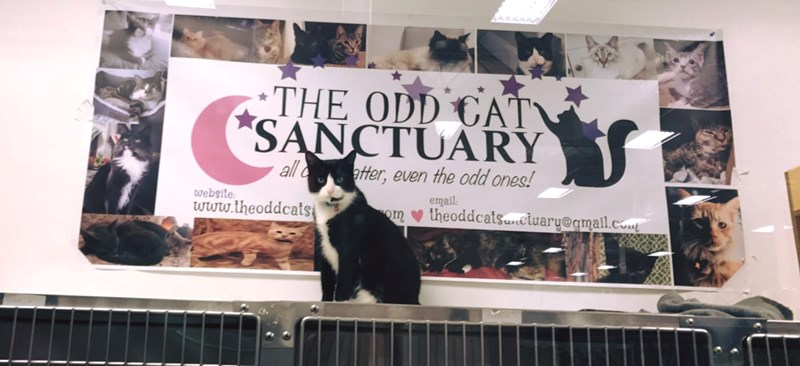 meet the odd cat sanctuary