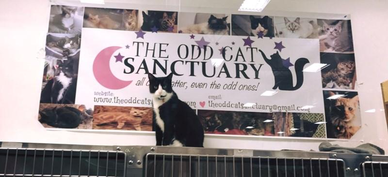 meet the odd cat sanctuary