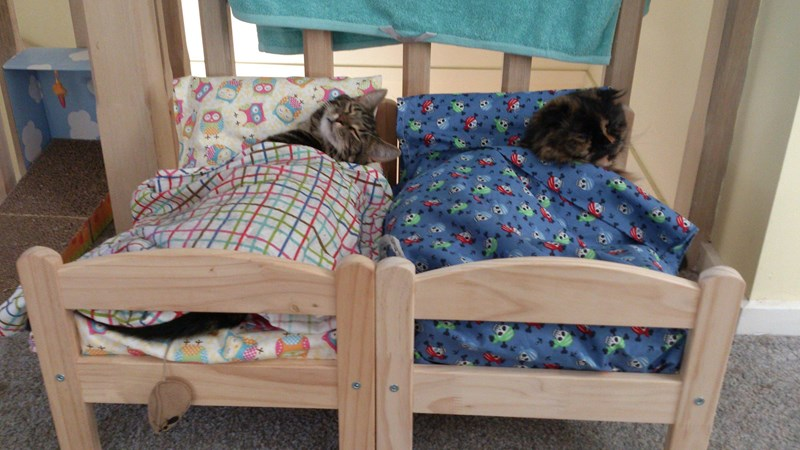 cats sleeping in IKEA beds
