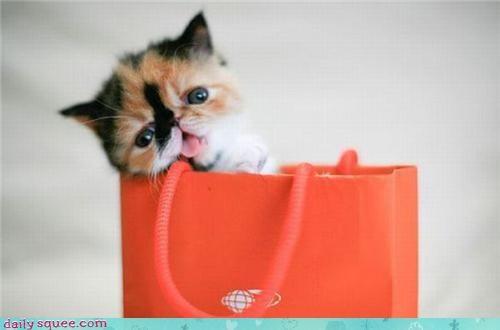 face kitten pug - 3417382400