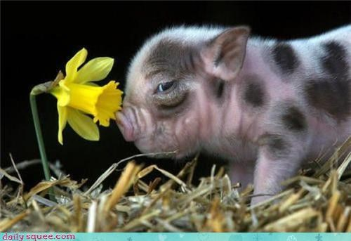 face Flower pig - 3417854464