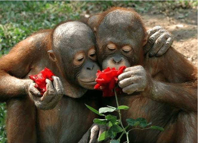 cute animals smelling flowers