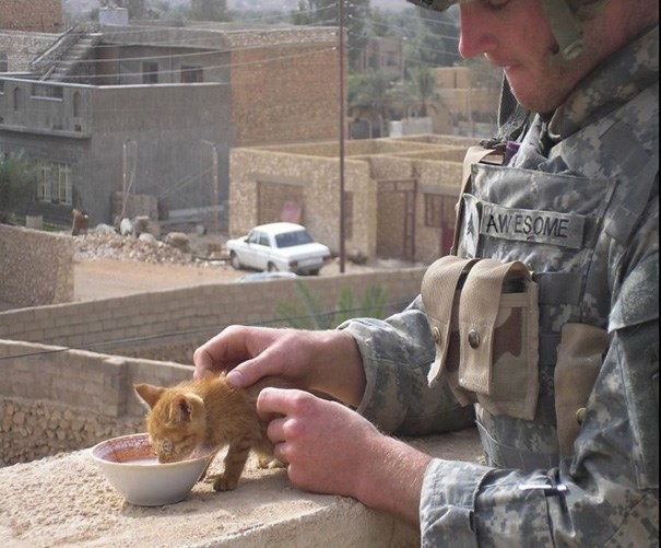 photos of soldiers and their cats