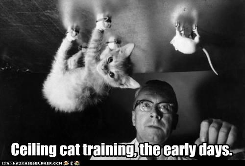 Caturday ceiling cat science upside down - 3418972928