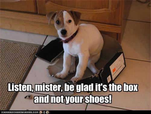 Listen, mister, be glad it's the box and not your shoes!