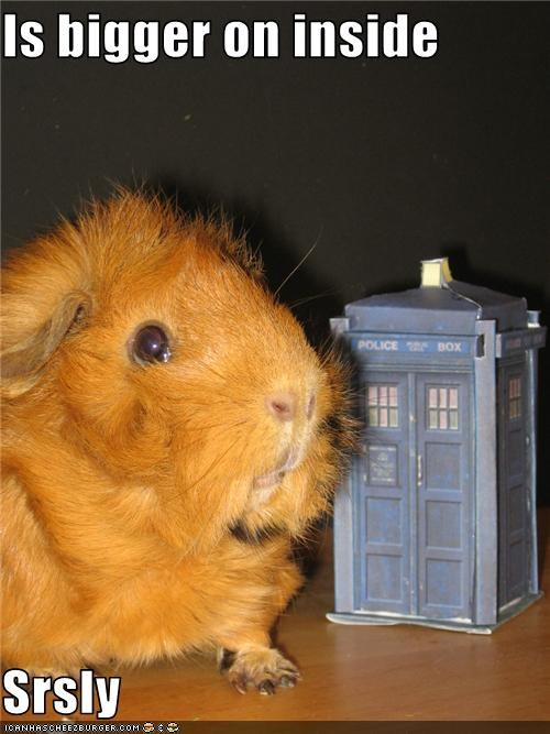 cute doctor who lolguineas tardis TV - 3420336640