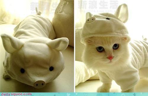 cat,costume,pig
