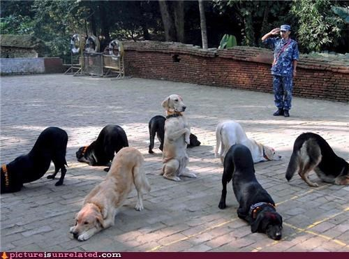 dogs mating military training wtf